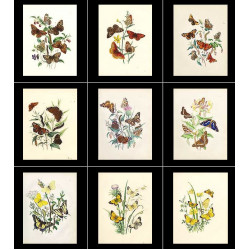 High Res Images: 42 Butterfly Antique Prints