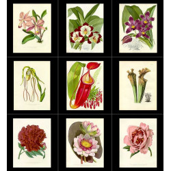 High Res Images: 36 Artworks From The Flower Garden Displayed by Joseph Paxton