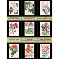 High Res Images: 42 Artworks From The Magazine of Botany by Joseph Paxton