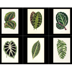 High Res Images: 54 Beautiful Leaves by Hibberd