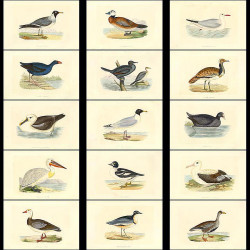 High Res Images: 58 Birds And Eggs By Benjamin Bree