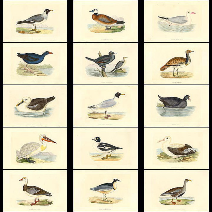 Antique print. High Res Images: 58 Birds And Eggs By Benjamin Bree