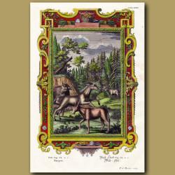 Unicorn, Onager And Bulls