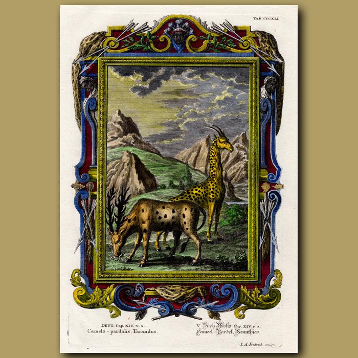 Antique print. Reindeer And Giraffe