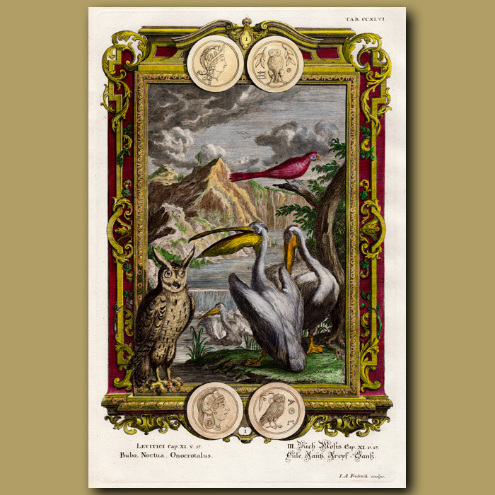 Antique print. Eagle Owl And Pelicans