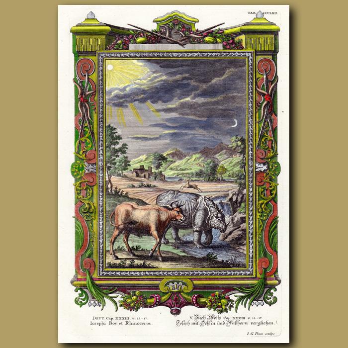 Antique print. Bull And Rhinoceros