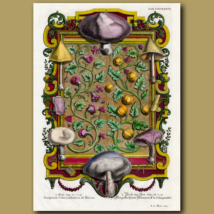 Antique print. Mushrooms, Flowers And Gourds