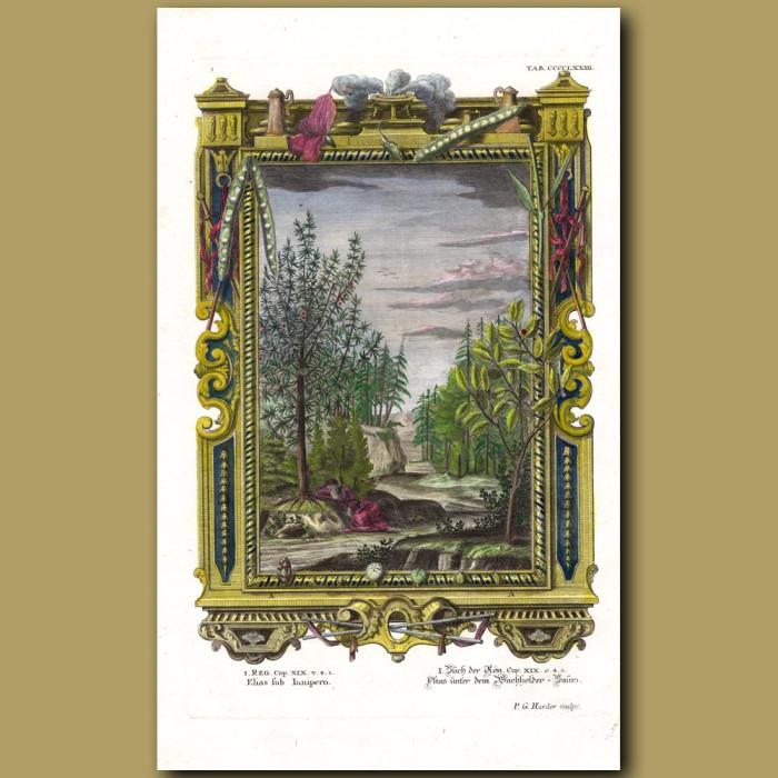 Elias (Elijah) Under Juniper Tree. (Elias Sub Junipero): Genuine antique print for sale.