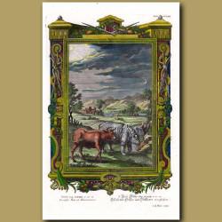 Bull, Rhinoceros And Deer