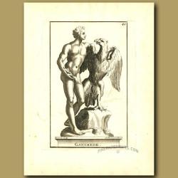 Ganymede a Greek Divine Hero