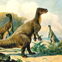 Fossils, Prehistoric etc