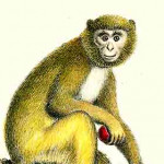Monkeys, Lemurs etc