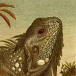 Reptiles etc