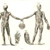Medicine and Anatomy