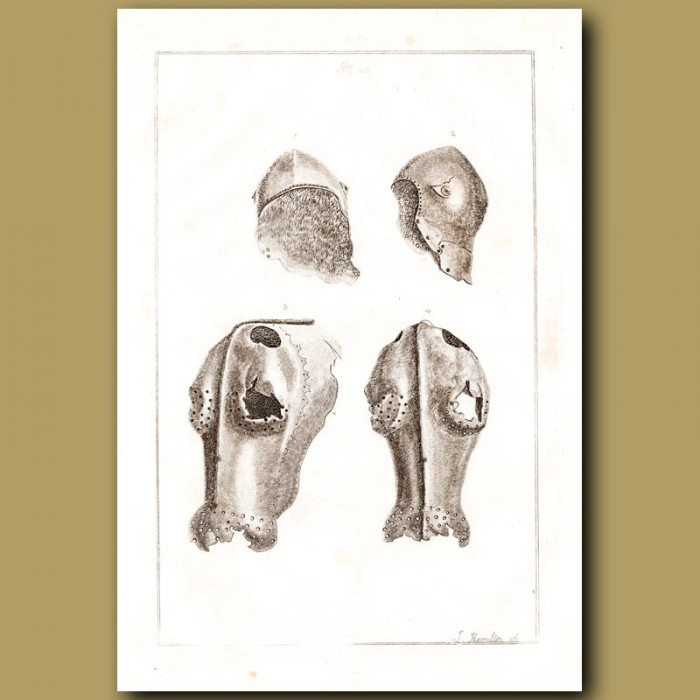 Antique print: Helmet And Iron Chaffron – Armour For A Horses Head