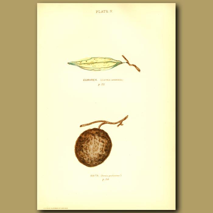 Antique print. Starfruit And Wood Apple (Kamarek And Kaita)