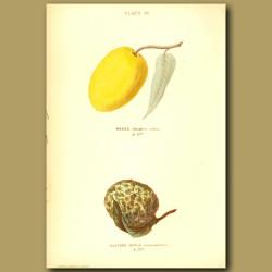 Mango And Custard Apple