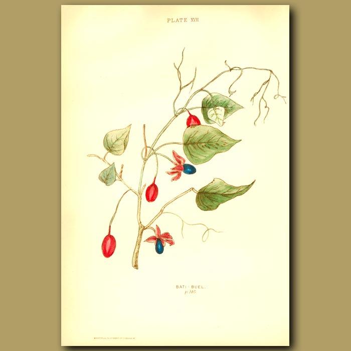 Antique print. Bati-Buel