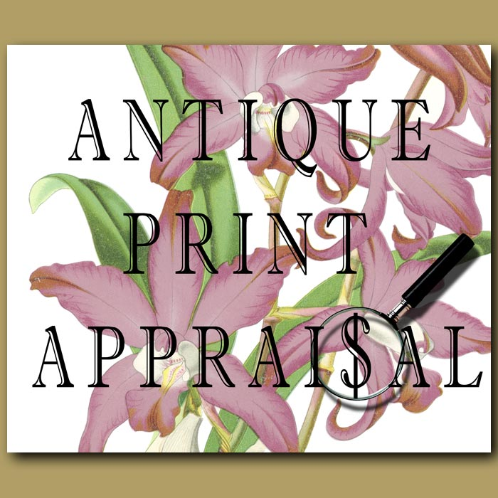 Antique print. Valuation and appraisal of antique prints