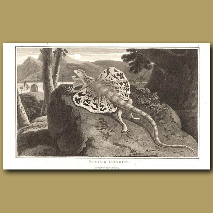 Antique print. Flying Dragon Lizard