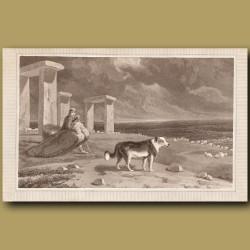 Shepherd's Dog (Collie)