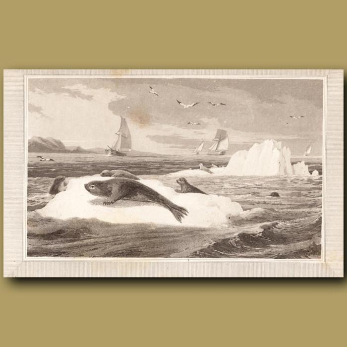 Seal: Genuine antique print for sale.