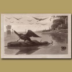 Carrion Vulture