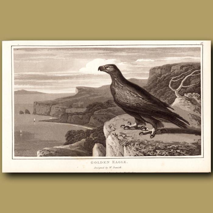 Antique print. Golden Eagle overlooking sea