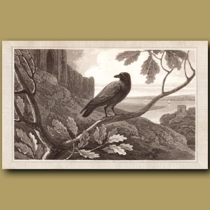 Raven: Genuine antique print for sale.