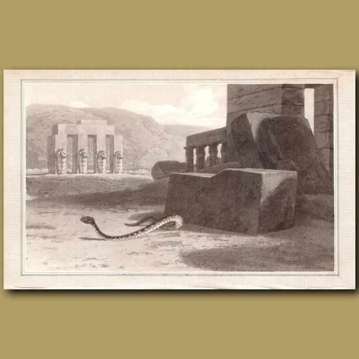Horned Viper: Genuine antique print for sale.