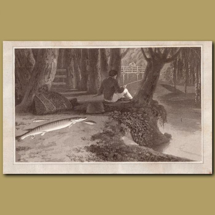 Pike: Genuine antique print for sale.