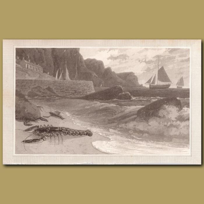 Lobster: Genuine antique print for sale.