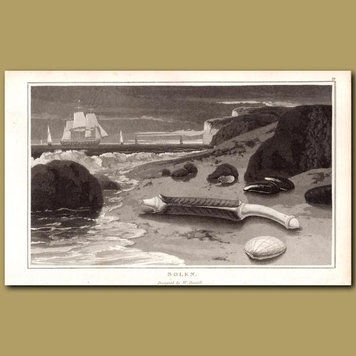 Solenette: Genuine antique print for sale.