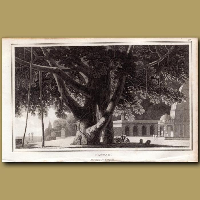 Banyan: Genuine antique print for sale.