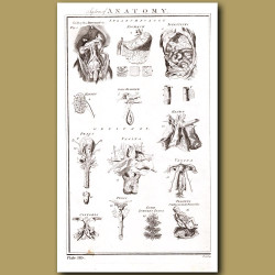 System of Anatomy (Splanchnology, Genitals)