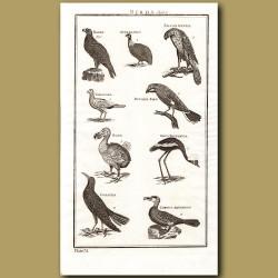 Birds: Dodo etc