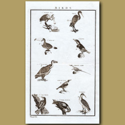 Birds: Toucan Etc.