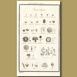 System Of Botany: Linnean System