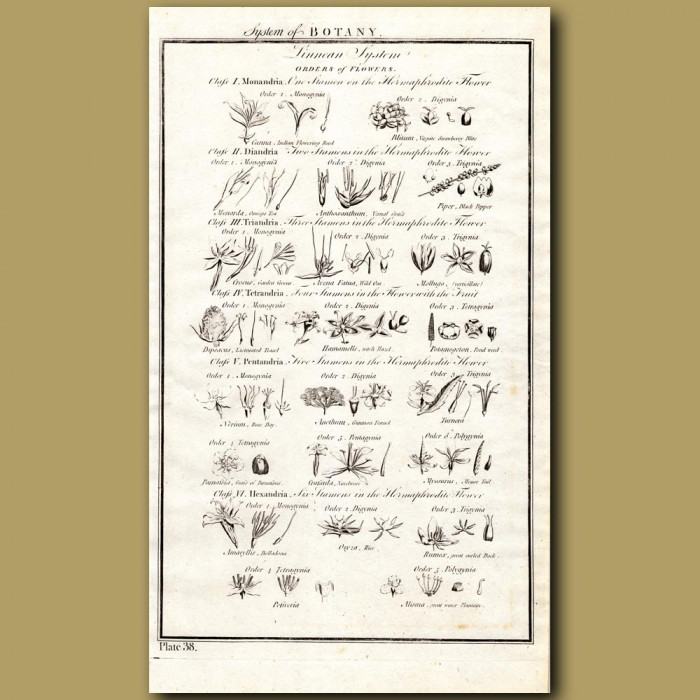 System Of Botany: Orders Of Flowers: Genuine antique print for sale.