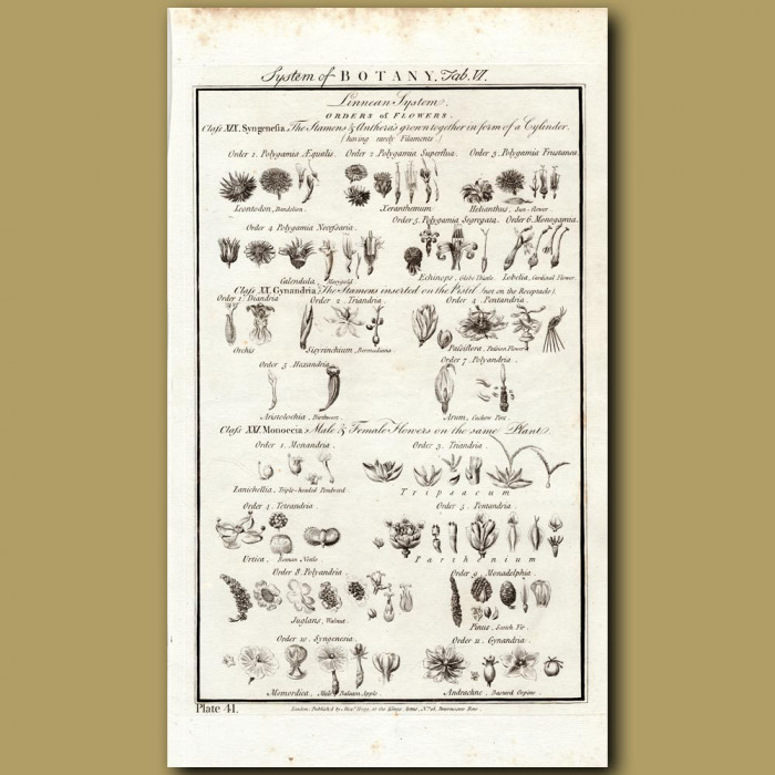 System Of Botany: Linnean System Orders Of Flowers: Genuine antique print for sale.