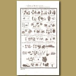 System of Botany