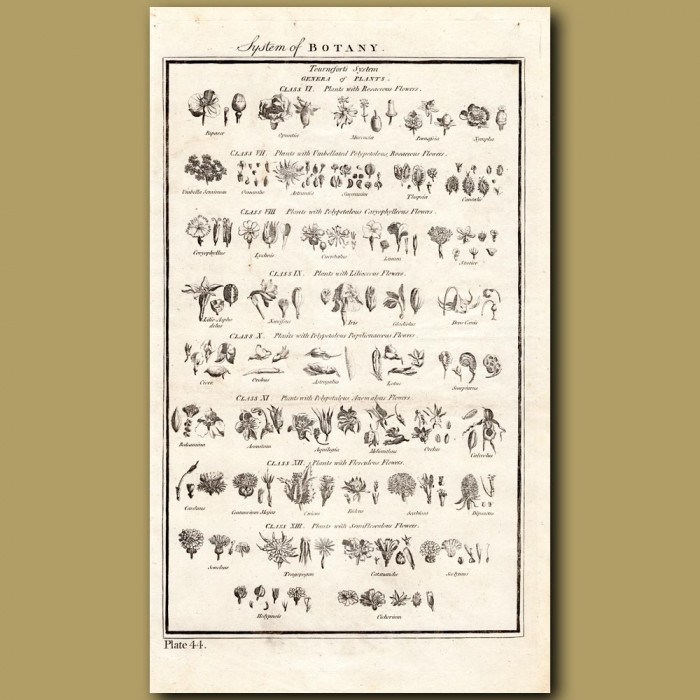 System Of Botany: Orders Of Plants: Genuine antique print for sale.