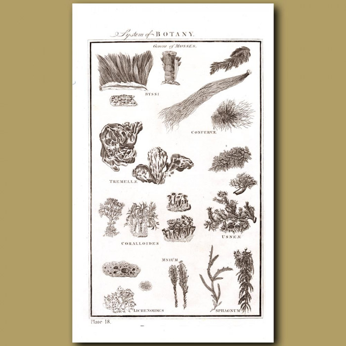 System of Botany (Genera of Mosses): Genuine antique print for sale.