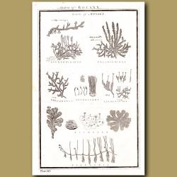 System of Botany (Genera of Mosses)