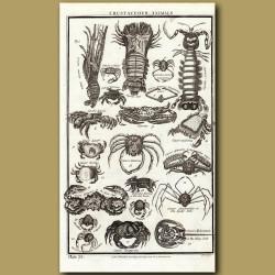 Crustaceous Animals