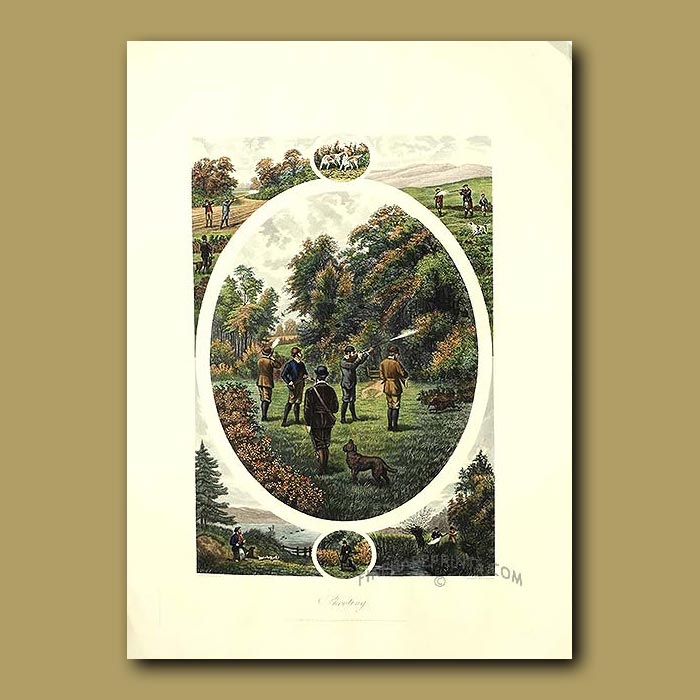 Antique print. Pheasant Shooting By William Tuck. Shooting