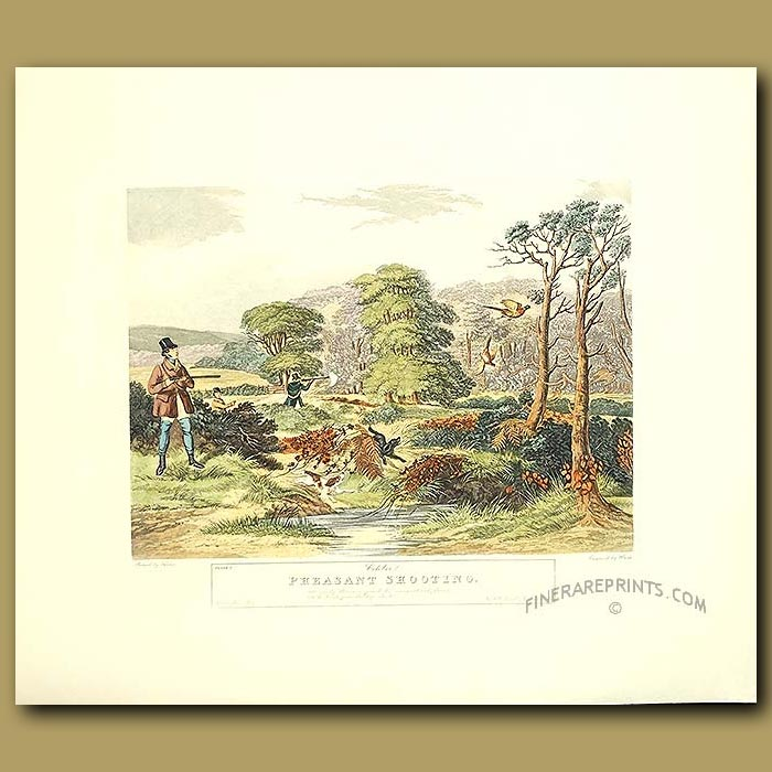 Antique print. Game Shooting By Turner. October Pheasant Shooting