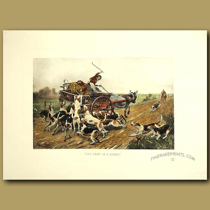 Antique print. A Fox Escaping From Fox-Hounds. Any Port In A Storm