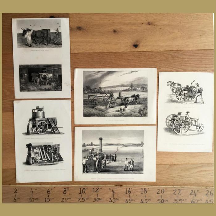 Set of 5. Farming Equipment: Genuine antique print for sale.