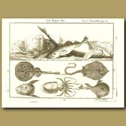 Rays, Shark, Sunfish, Octopus, Puffer Fish